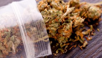 bag of dried marijuana, WeedWired Marijuana Legalization Blog